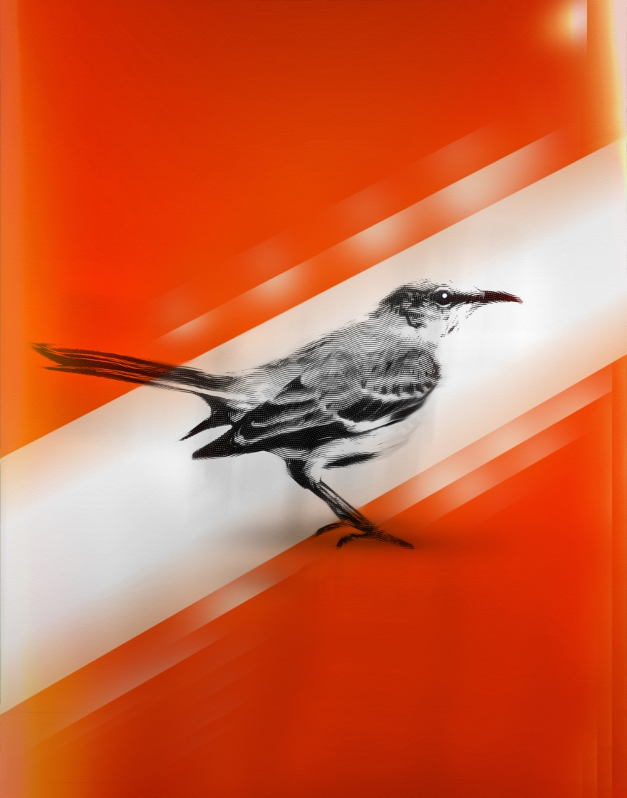 mocking bird book print